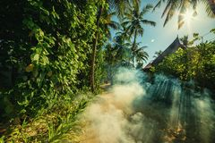 A mysterious atmosphere with palms in the jungle, exotic woods. In maldives stock images