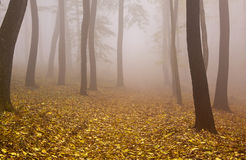 Mysterious Autumn Royalty Free Stock Photos