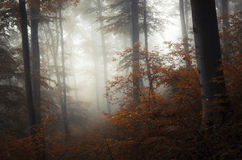 Mysterious autumn forest with fog Stock Image