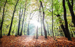 Mysterious autumn forest landscape with sunbeams Stock Photo