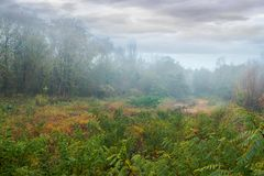 Mysterious autumn scenery on an overcast day. Park in fog. mysterious autumn scenery on an overcast day stock photos