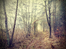 Mysterious autumnal forest in a foggy day Royalty Free Stock Photography