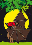 A mysterious bat pirates Stock Images