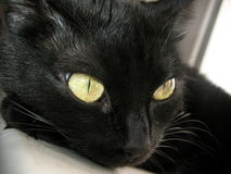 Mysterious black cat 2 Royalty Free Stock Image