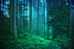 Mysterious blue and green forest Royalty Free Stock Photography