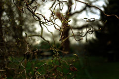 Mysterious branches Stock Images
