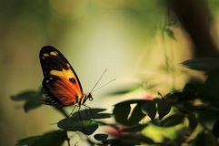 Mysterious butterfly Royalty Free Stock Photos