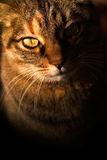 Mysterious cat Stock Photography