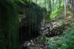 Mysterious cave entrance in big stone with liana in forest. Big stone and mysterious cave entrance in the forest covered with liana and trees in national park in Stock Images