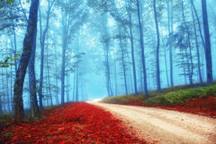 Mysterious colorful forest. Beautiful mysterious red and blue color season forest with road. Intensity color filter effect used Stock Photos