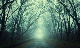 Mysterious dark autumn forest in green fog with road, trees