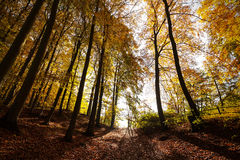 Mysterious dark autumn forest landscape Royalty Free Stock Photos