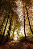 Mysterious dark autumn forest landscape Stock Photography