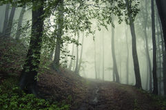 Mysterious dark forest with eerie green fog Stock Photo