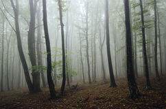 Mysterious dark forest with fog Stock Images