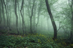 Mysterious dark forest in fog with green leaves and flowers  Stock Photo