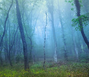 Mysterious dark forest in fog with green leaves and yellow flowe Royalty Free Stock Images