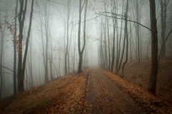 Mysterious dark forest with fog and road in autumn Royalty Free Stock Image