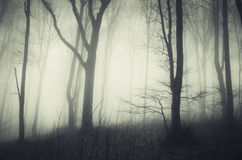 Mysterious dark forest Royalty Free Stock Photo