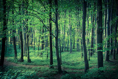 Mysterious dark forest Stock Photos