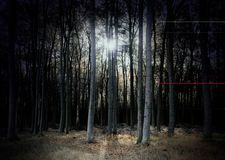 Mysterious dark forest in pale colors with low standing sun, scary fantasy landscape for halloween. Selected soft focus royalty free stock photography