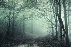 Mysterious dark forest with spooky trees and green fog stock image