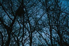 Mysterious dark forest, trees and branches background stock images