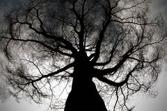 Mysterious dark ghost tree. Worm eye view Stock Images