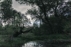 Mysterious night forest with swamp. Mysterious dark night forest with swamp stock images