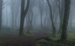Mysterious dark old forest with fog. In the Sintra mountains in Portugal Royalty Free Stock Images