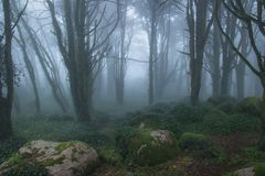 Mysterious dark old forest with fog Royalty Free Stock Photo