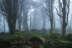 Mysterious dark old forest with fog Royalty Free Stock Photos