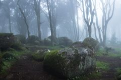 Mysterious dark old forest with fog Royalty Free Stock Photography