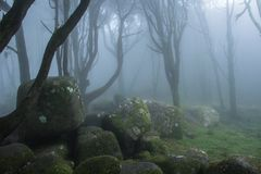 Mysterious dark old forest with fog Stock Photo