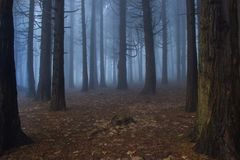 Mysterious dark old forest with fog. In the Sintra mountains in Portugal Royalty Free Stock Photo