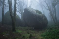 Mysterious dark old forest with fog Stock Photography