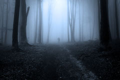Mysterious dark silhouette in the forest during fog. Trail in the forest. Blue light through the trees and a dark figure in the background Royalty Free Stock Photography