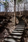 Mysterious dead forest and stairs leading into the up hill stock photo