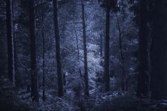 Mysterious deep forest. Mysterious misty deep forest in blue. Used infrared filter stock image