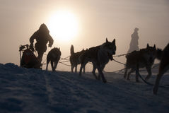 Mysterious dog sled Royalty Free Stock Photos