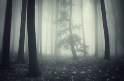 Mysterious enchanted dark forest with fog and tree Stock Photo