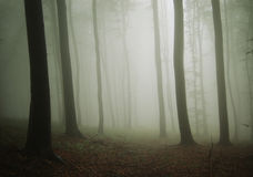 Mysterious ethereal forest with fog after rain Stock Photos