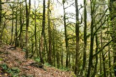 Mysterious, fabulous, frightening forest. Autumn forest on a rainy day royalty free stock photography