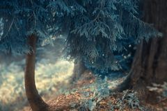 A mysterious fabulous photo in blue, a small conifer like a house for magical fairies and dwarfs during a cool winter stock photo