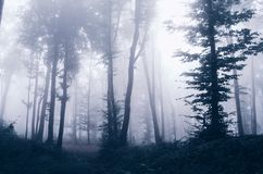 Mysterious fantasy forest with fog Royalty Free Stock Images