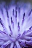 Mysterious flower macro Stock Photos