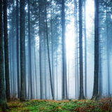 Mysterious fog in the green forest Stock Photography