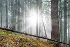 Mysterious fog in the green forest Royalty Free Stock Photo