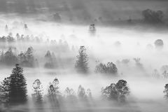 Early morning long shadow of trees in fog Royalty Free Stock Image