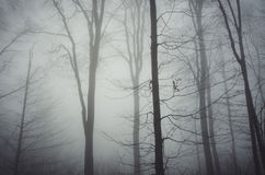 Mysterious fog in the trees in late autumn Royalty Free Stock Images